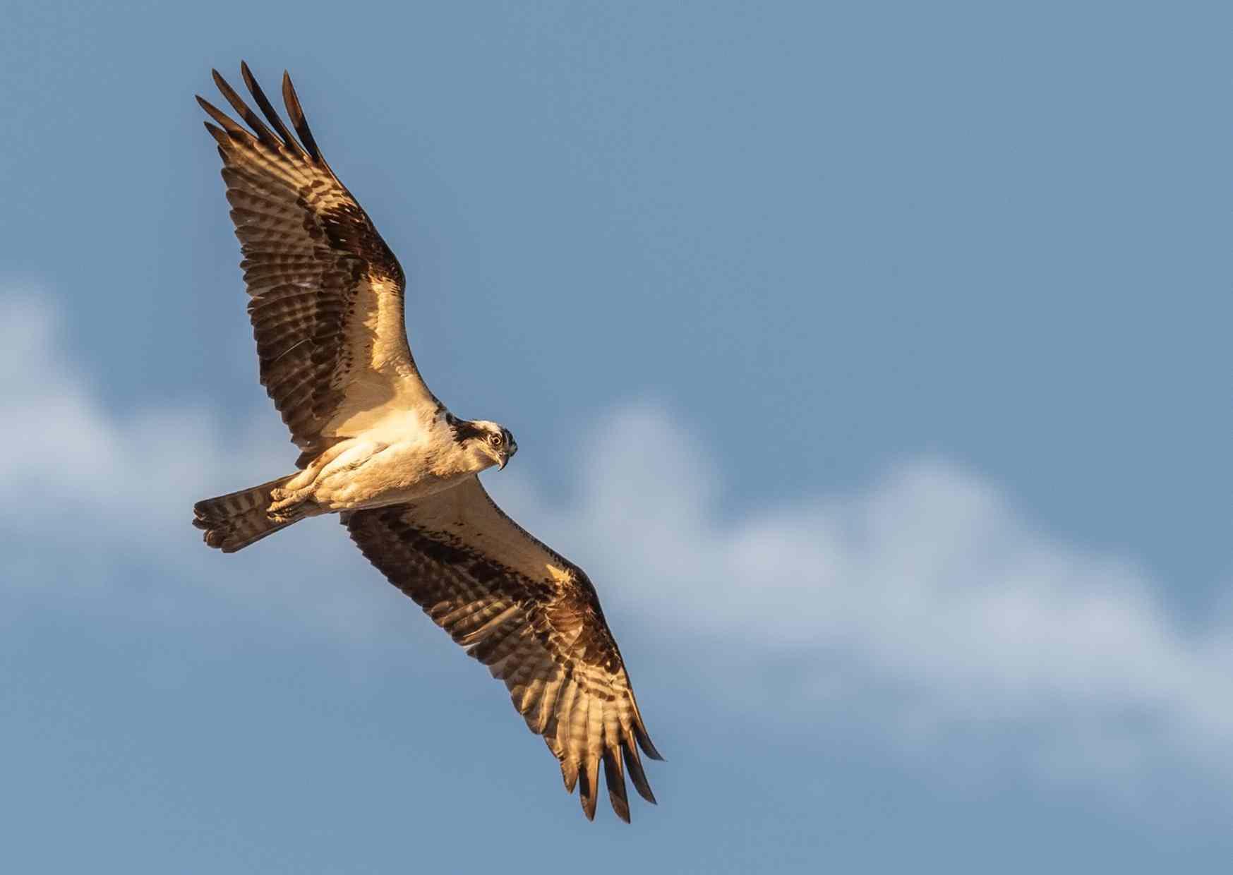 Inspiratie Eagle